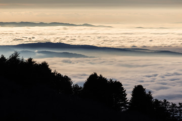 Beautiful view of Umbria valley (Italy) covered by a sea of fog at sunset, with beautiful warm colors and trees silhouettes in the foreground
