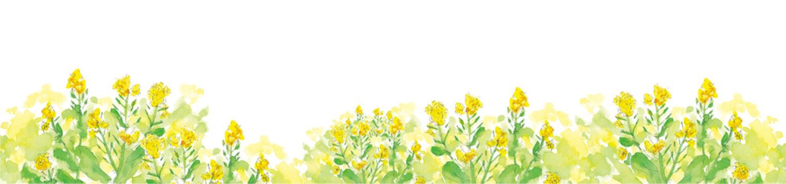菜の花の道。 水彩イラストのトレースベクター。