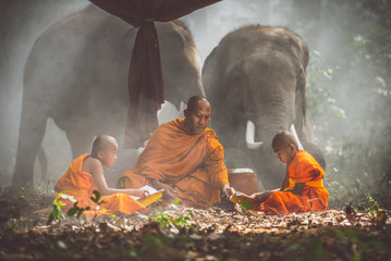 Obraz Thai monks studying in the jungle with elephants - fototapety do salonu