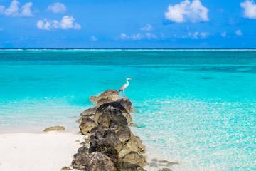 Stork on the Maldives beach
