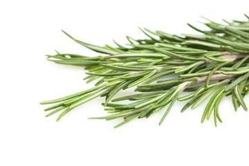 green rosemary sprig