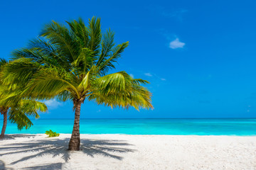 Palm tree on tropical paradise beach with turquoise blue water and blue sky