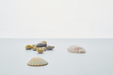 concha y piedras