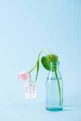 white tulip in transparent glass vase with happy mothers day greeting label on blue background