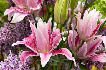 Rosa Lilien und Flieder