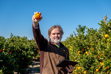 Farmer with a tablet shows an orange in his field of cultivation
