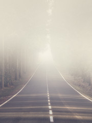 mysterious foggy road