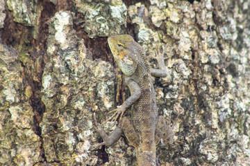 Beautiful chameleon rises on a tree