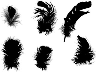 six fluffy black feathers isolated on white