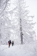 Fototapete - Couple hiking by snow covered trees in a winter forest