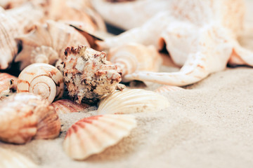 Seashells on the sand, summer beach background, travel concept .