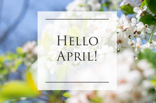 Hello April. Spring background with flowers. Cherry blossom outdoors on a sunny day. Cherries on a natural background, delicate spring flowers. Spring background, closeup. Soft selective focus