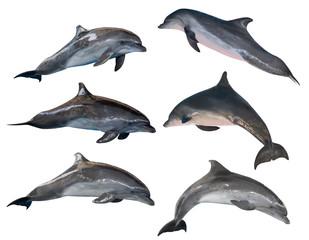 Foto auf Leinwand Delphin isolated six grey common bottlenose dolphins