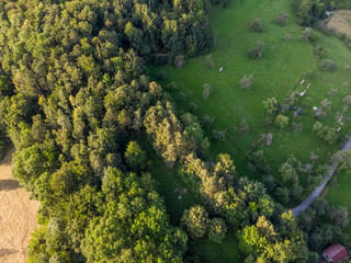 Waldrand von Oben - Luftaufnahme