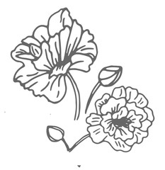 Flower monochrome black and white isolated on background. Hand-drawn. design greeting card and invitation