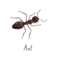 Ant drawing, vintage engraved illustration style, hand drawn doodle, sketch, vector with inscription