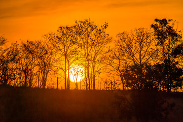 Meadow with sun 7