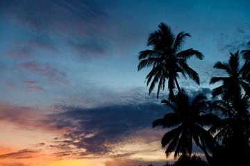 Tropical Sunset Palm Silhouette Landscape. Sri Lanka Beach