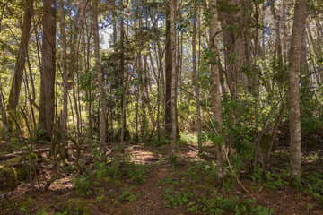 path in the forest natue landscape patagonia argentina sunlight green leaf branch