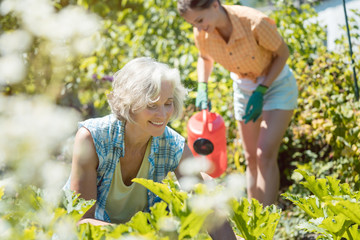 Senior and young woman gardening together