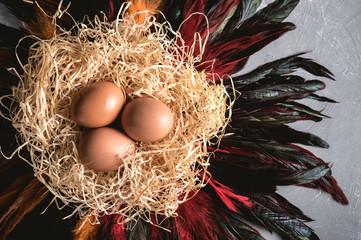 Fresh chicken eggs on decorative nest