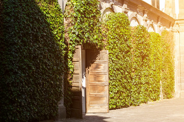 Antique opened doors and the wall covered with green plant in the patio of a medieval castle in Italy. Toned image
