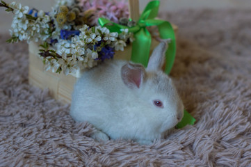 Cute white rabbits near a basket of flowers as a symbol of Easter.  Easter card with cute white rabbits