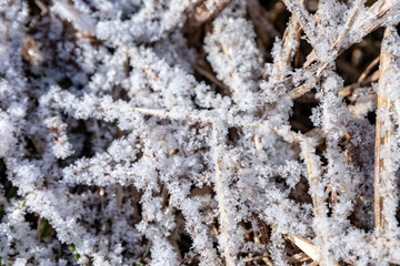Frost Crystals Close Up