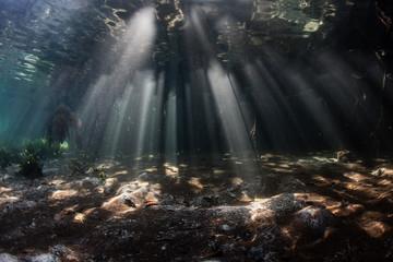 Shadows and Beams of Light in Mangrove, Raja Ampat