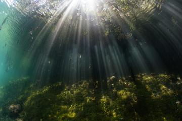 Sunbeams and Blue Water Mangrove in Raja Ampat