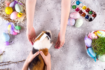 Guinea pig with the ears of the Easter bunny in children's hands against the background of colored eggs. Easter holiday