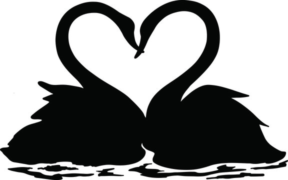 A pair of swans swimming together in a lake, black and white illustration, Valentine's day, 14 February