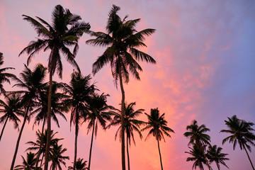Tropical palms and the sky. Sri-lanka.