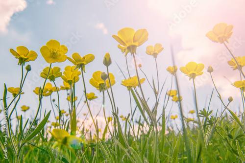 First Spring Flowers Grow To The Sun Stockfotos Und Lizenzfreie