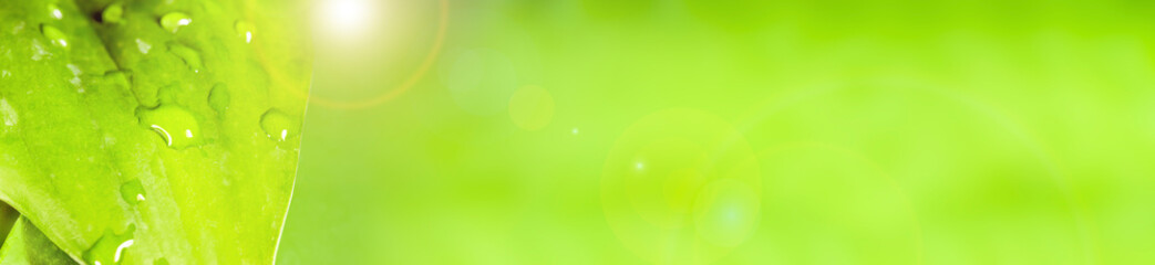 green leaf with dew on the surface, panoramic image Wall mural