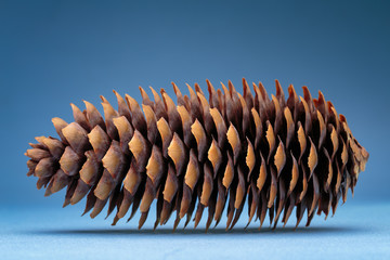 Dry spruce cone