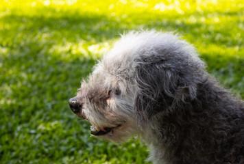 cachorro de perfil