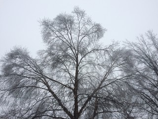 winter trees covered in ice
