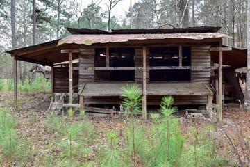 Old Wooden Log Cabin Farmhouse and Farmstead