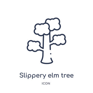 slippery elm tree icon from nature outline collection. Thin line slippery elm tree icon isolated on white background.