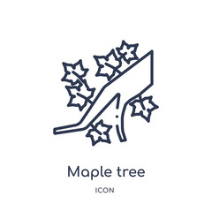 maple tree icon from nature outline collection. Thin line maple tree icon isolated on white background.