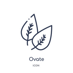 ovate icon from nature outline collection. Thin line ovate icon isolated on white background.