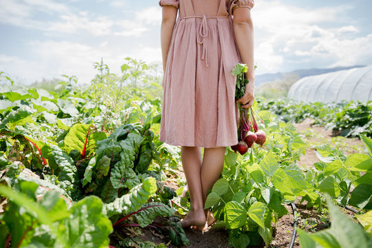 Low section of woman walking in field with red beet