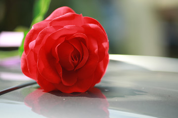 Red rose for background