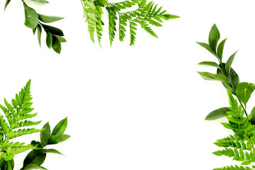 Spring background. Fresh green leaves frame on white background top view copy space