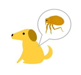 犬に寄生するノミ