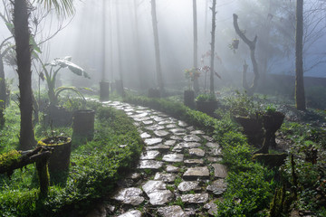 Wet path in the garden or forest with mist
