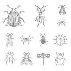 Vector design of insect and fly logo. Collection of insect and element stock vector illustration.