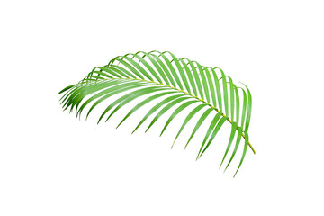green palm leaf isolated on white for summer background