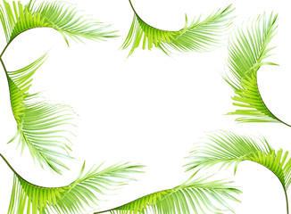tropical green palm leaves on white for summer background